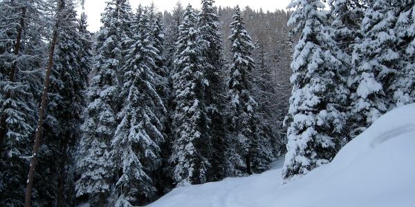Die Spuranlage im Wald erfordert etwas Orientierungssinn. Am besten man folgt in etwa den rot-weiß-roten Markierungen an den Bäumen.