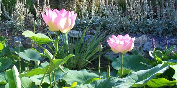 Philemons Garten