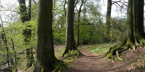 entlang des Holzer Baches